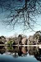The Lake, Mount Stewart