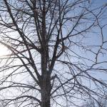"""""""winter sunlit tree"""" by LillianDavis"""