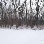 """winter woods"" by LillianDavis"