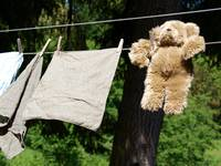 Bear on a Wire