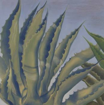 kristina agave фото