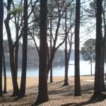 """Carolina mist"" by ArtZThings"