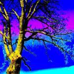 """""""Blackened Blue Oak"""" by shindigenometry"""
