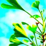 """Stretching Spring Ginko"" by shindigenometry"
