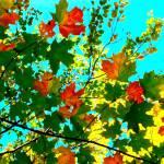 """Sugar Maple Marmalade"" by shindigenometry"