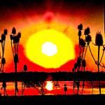 """Thistle Sunset"" by shindigenometry"