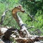 """Serpent Tree"" by SharonSerota"