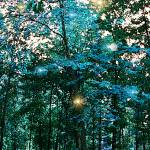 """Tree spirit"" by MariaK"