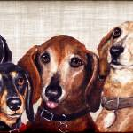 """6 Dachshunds"" by stella"