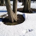 """Tree Puddles"" by LillianDavis"