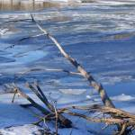 """Driftwood over ice"" by LillianDavis"