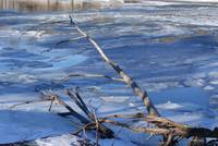 Driftwood over ice