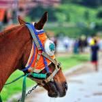 """15 - CCP - San Lazaro Leisure Park Race Track OTS"" by JRRodriguezIV"