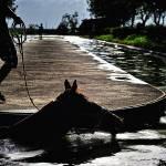 """39 - CCP - San Lazaro Leisure Park Race Track OTS"" by JRRodriguezIV"