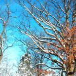 """Sunny Winter"" by davidst"