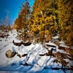 """Winter Morning"" by Freezeframe"