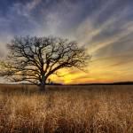 """Tree1cORG"" by jpat"
