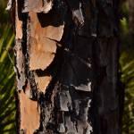 """Tree Bark"" by michellealexis"