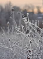 Heavy Frost, Very Cold