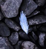 Feather and Stone