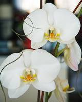 Orchids from my Valentine II