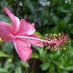 """Flower Prong..."" by inmyeye"
