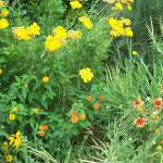 """""""Wild Flowers"""" by SharonSerota"""