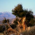 """Joshua Tree #6 Keys View"" by dmapix"