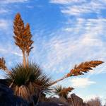 """Joshua Tree NP #2"" by dmapix"