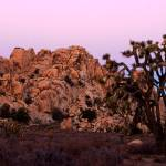 """Joshua Tree Sunset #2"" by dmapix"