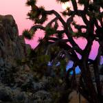"""Joshua Tree sunset #1"" by dmapix"