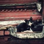 """""""Curious Cat"""" by czsoul"""