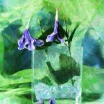 """Purple Flowers"" by Debrene"