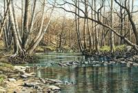 Spring on Leatherwood Creek