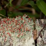 """Match-Stick Lichens"" by ChristineStonebridge"