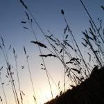 """Coastal Grass"" by diavolo_felice"