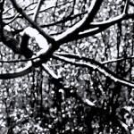 """Winter Wonderland        Black Ink Edition"" by BarbaraLin"