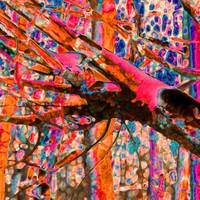 Abstract Aspens  0835-12