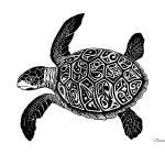 """Sea Turtle Ink Drawing, ""Glyph Turtle"""" by savanna"