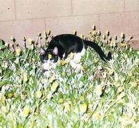 Cat In Flower Bed