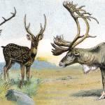 """Large Game with Antlers"" by GilWarzecha"
