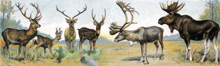 Large Game with Antlers