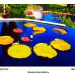 """""""Cascading Pond"""" by randombeam"""