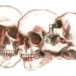 """""""Skull Study"""" by Aesthete"""