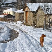 A dog in the village