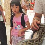 """""""Girl sees Snake, Penang, Malaysia 2010"""" by unstill"""