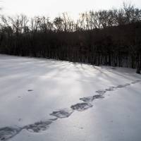 Squantz Pond Winter Three Art Prints & Posters by Nicholas Volant