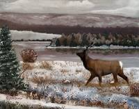 Winter Scenery (with elk)