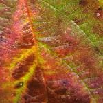 """Leaf Reading"" by DeniseRFleming"