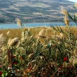 """Kinneret in Bloom"" by ginadittmer"
